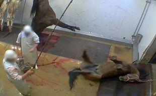 Une capture d'écran de la vidéo, diffusée le 14 octobre 2015,montrant des mauvais traitements dans l'abattoir d'Alès, dans le sud de la France