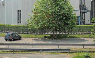 L'usine Stracel compte 260salariés.