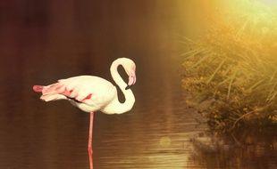 La Camargue est un paradis ornitologique, et on y croise de nombreux échassiers. De quoi sortir à son tour son appareil photo !