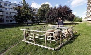 A Bagnolet, en Seine-Saint-Denis, depuis qu'un berger s'est installé entre des barres HLM, un carré d'herbe s'est transformé en pré et les chèvres Jennifer et Jessica sont devenues les stars de la cité.