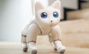 Une startup conçoit le premier chat bionique