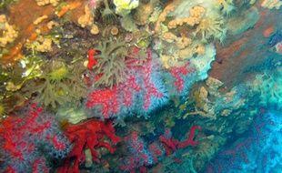L'Etat a interdit jeudi 18 août 2011 la pêche au corail rouge à faible profondeur le long de la côte Catalogne française