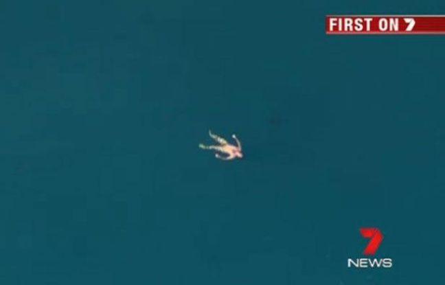Un pêcheur en détresse au large de Leeman, en Australie, le 10 août 2012 - capture d'écran d'une vidéo de 7 News.