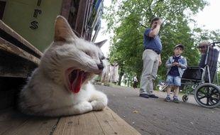Un chat dans une rue de Uglich, en Russie