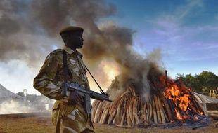 Un garde de sécurité aux côtés de 15 tonnes d'ivoire d'éléphant brûlés au sein du Parc national de Nairobi au Kenya, le 3 mars 2015