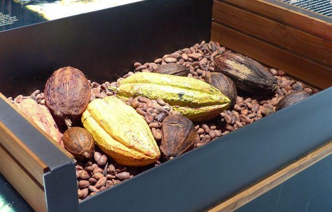 Le 25 octobre 2017, au musée-manufacture du chocolat, qui a ouvert ses portes à Limonest près de Lyon à l'initiative de Gaëlle et Richard Sève, artisan chocolatier.