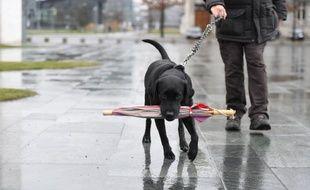 """Le Parlement a reconnu aux animaux la qualité symbolique """"d'êtres vivants doués de sensibilité"""""""