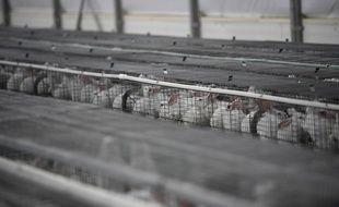 L'association de protection animal L214 réclame l'interdiction de l'élevage en cage pour toutes les espèces.