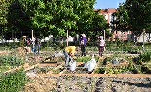 Les potagers écolos et partagés ont été lancés dès 1998 dans la ville basque de Vitoria-Gasteiz, capitale verte européenne en 2012.
