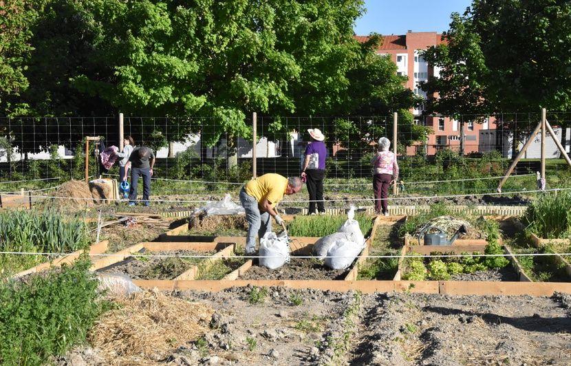 VIDEO. Elections européennes: Potagers partagés et anneau vert... Vitoria-Gasteiz, en Espagne, modèle de la ville verte de demain