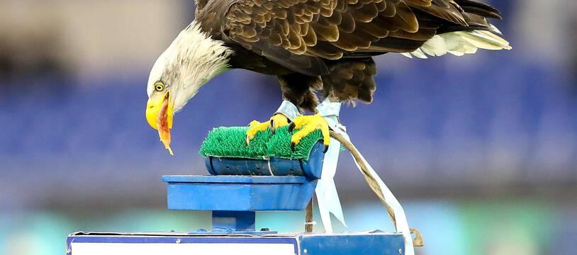 L'aigle de la Lazio, mascotte du club romain (photo d'illustration).