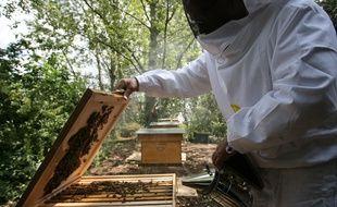 Des apiculteurs à Blagnac.