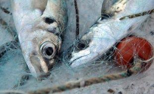 Près de neuf Français sur dix (87%) estiment que les ministres de la Pêche de l'UE devraient agir plus vigoureusement, à travers les quotas de pêche, pour minimiser le risque d'effondrement des stocks de poissons dans les océans, selon un sondage publié jeudi.