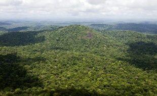 Vue d'une partie de la forêt amazonienne en Guyane française