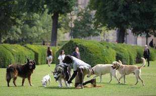 Des chiens jouent dans le jardin des Tuileries à Paris.