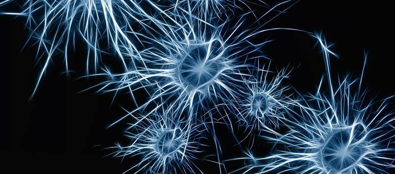 Illustration de neurones.
