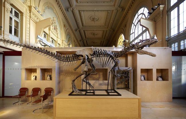 lyon le squelette de dinosaure vendu plus d 39 un million d 39 euros. Black Bedroom Furniture Sets. Home Design Ideas