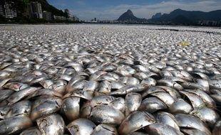 Des tonnes de poissons morts ont été ramassés dans le Lagoa Rodrigo de Freitas, à Rio de Janeiro, au Brésil, le 14 mars 2013.