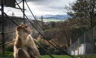 Au zoo de Saint-Martin-la-Plaine, situé entre Lyon et Saint-Etienne.