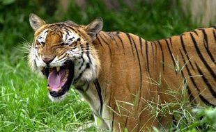 Un tigre dans un zoo du Bangladesh (illustration).