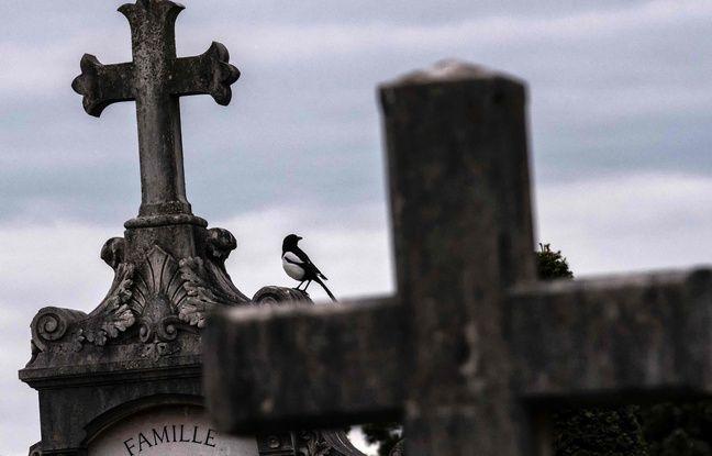 Soixante-et-une espèces, dont une trentaine d'oiseaux, ont été recensé dans ce cimetière.