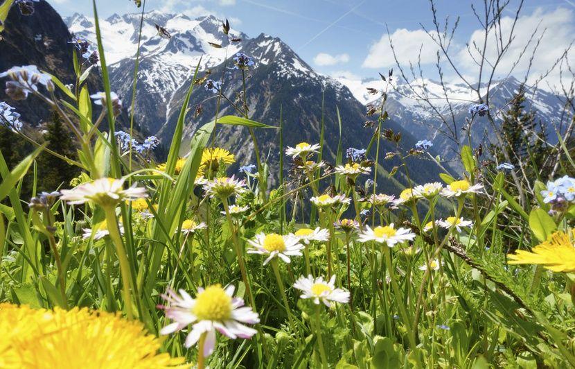 Visite estivale dans le vert Tyrol