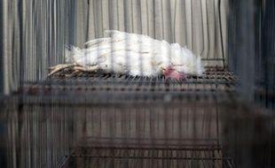 L'évacuation vers un abattoir du Bas-Rhin des poules pondeuses vivantes d'un élevage industriel de Kingersheim (Haut-Rhin) où elles agonisaient faute de nourriture s'est achevée dimanche en fin de matinée, a-t-on appris auprès de la préfecture du Haut-Rhin.