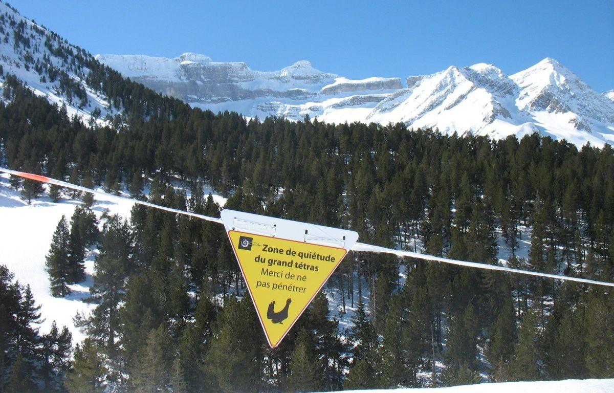 Des zones de quiétude ont été mises en place dans les Pyrénées pour ne pas déranger les animaux. – Joël Combes/ PNP