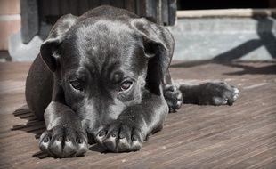 Plusieurs chiens ont été empoisonnés dans le Bas-Rhin