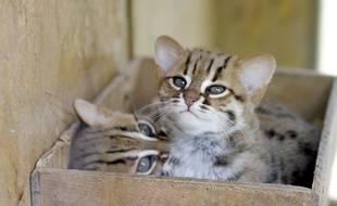 Attention aux chats qui traînent sur les balcons ou près des fenêtres ouvertes, l'été.