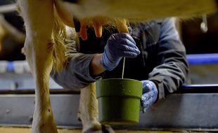 Illustration d'un élevage de vaches laitières. Ici à Plesse en Loire-Atlantique.