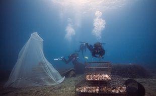 Des scientifiques observent de jeunes poissons évoluer dans un biohut, une nursery sous-marine mise au point par la PME montpelliéraine Ecocean.