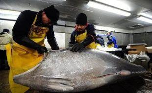 Les 48 membres de la CICTA, réunis jusqu'au 27 novembre à Paris, doivent fixer les quotas de pêche pour 2011 mais aussi réviser les systèmes de contrôles mis en place il y a deux ans et qui souffrent toujours de graves lacunes, selon Greenpeace et le WWF.