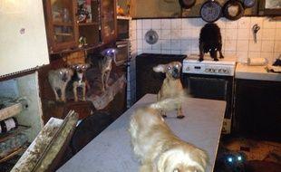 Une partie des chiens libérés ce jeudi matin du logement où ils vivaient confinés à Chelles.