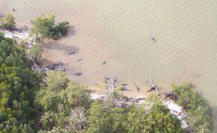 Plus de 80 fausses orques ont trouvé la mort mardi 17 janvier 2017 après s'être échouées dans un mangrove de Floride.
