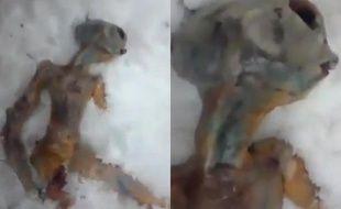 Capture d'écran d'une vidéo montrant le prétendu cadavre d'un alien, en Sibérie.