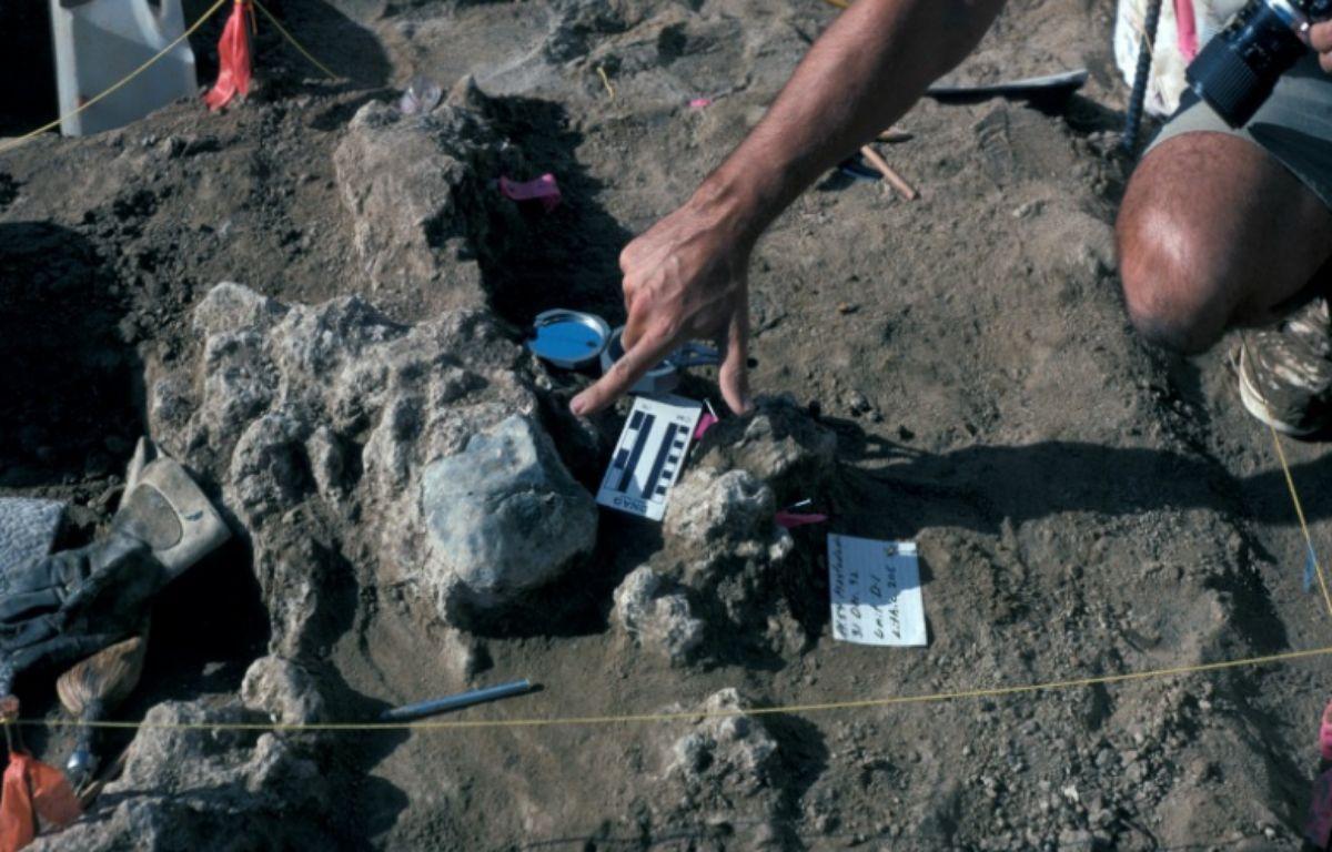 Des scientifiques ont daté en avril 2017 de 130.000 ans la présence humaine sur le continent américain, vieillissant de plus de 100.000 ans les premiers Américains. – Muséum d'histoire naturel de San Diego