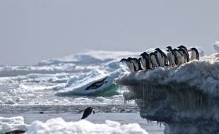 En 2009, la CCAML s'était doté d'un accord-cadre actant la création d'un réseau d'aires marines protégées encerclant l'Antarctique.