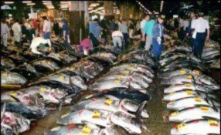La quasi-totalité des espèces de poissons et de crustacés pêchés pour la consommation auront disparu des océans avant 2050 si les tendances actuelles se poursuivent, ont mis en garde jeudi des scientifiques américains et canadiens.
