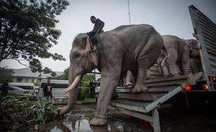 Illustration: Des éléphants arrivent à Bangkok, en Thaïlande le 8 novembre 2016.
