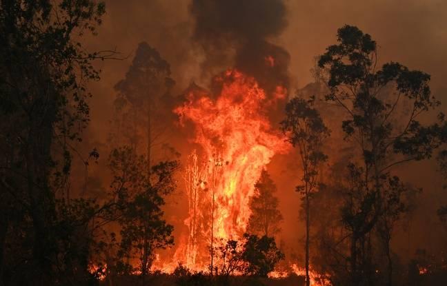 Australie: Il provoque un incendie en voulant protéger ses plants de cannabis... d'un incendie