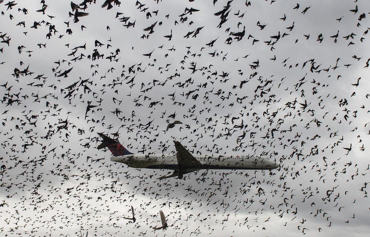 Le péril aviaire est pris en compte par les constructeurs aéronautiques lors de la conception de leurs avions. – Andrew Caballero-Reynolds / AFP
