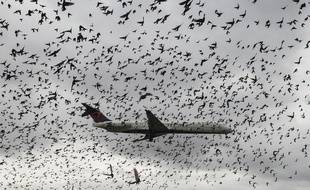 Le péril aviaire est pris en compte par les constructeurs aéronautiques lors de la conception de leurs avions.