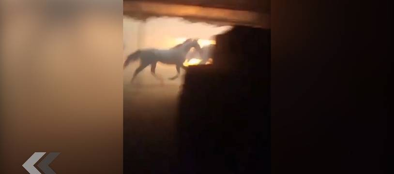 Il sauve des chevaux d'un terrible incendie en Californie - Le Rewind