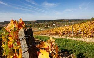 Un champ de vigne (pas du tout dans le Vaucluse, mais ceci est une photo d'illustration).
