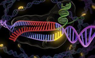 La méthode CRISP-Cas9 permet de modifier un brin d'ADN.