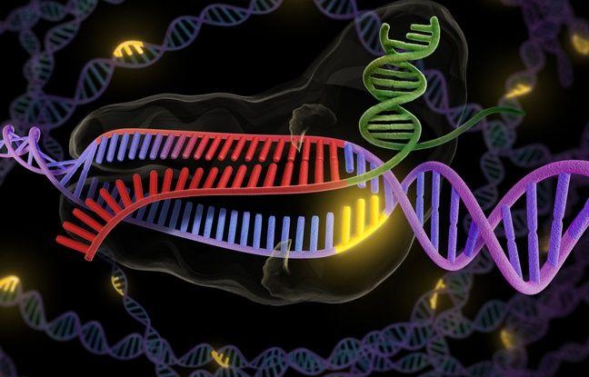 La méthode CRISP-Cas9 permet de modifier un brin d'ADN et de jouer sur l'expression d'un gène.