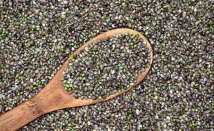 Des graines de chanvre (illustration).