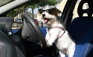 Illustration d'un chien dans une voiture.