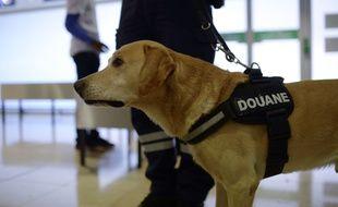 Un chien des douanes renifleur de drogue.